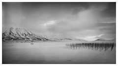 Trond Lindholm 10 - drive by shooting (stefanolympus) Tags: svalbard