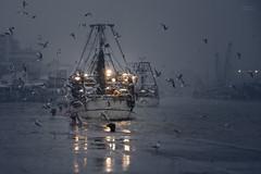 in ogni condizione (Flachir ( Flavio Ricci )) Tags: light blu seagull porto luci gabbiano peschereccio