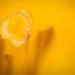 "Pistil • <a style=""font-size:0.8em;"" href=""http://www.flickr.com/photos/53131727@N04/13521171274/"" target=""_blank"">View on Flickr</a>"