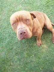 (carolinacenóz) Tags: park dog pet argentina animal buenosaires kodak easyshare c813 kodakeasysharec813