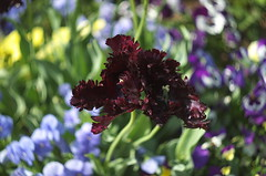 IMGP6813-2 - Fleurs