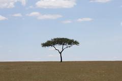 One Tree Plain