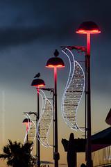 Morning Lights (NathalieSt) Tags: lights lagrandemotte