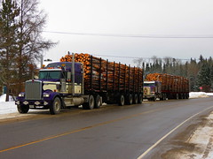 Priority Sequence (jr-transport) Tags: ontario logger kenworth w900