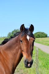 Paarden Horses (ellenanka) Tags: horse brown nikon horsehead bruin paard paardenhoofd d3100