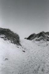Dünen (Turikan) Tags: denmark stand mju zoom olympus dev 400 rodinal fomapan söndervig