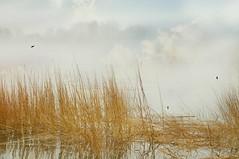Sense Ability (floralgal) Tags: seascape fog landscape dramaticsky seagrass longislandsound ryenewyork westchestercountynewyork ryenewyorkseascape