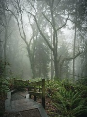 Spooky Wednesday (KurtClark) Tags: park fog forest washington bellevue weowna