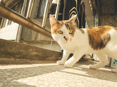 (Nicholas  H) Tags: morning light pet sun cute sunshine cat sunrise good pussy stretch solarium rise    refresh