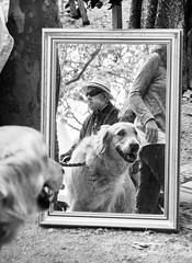 Gos enmirallat (perro en el espejo) (Pep Vargas) Tags: bw dog mirror bn perro espejo reflejo gos reflexe mirall cardedeu em1