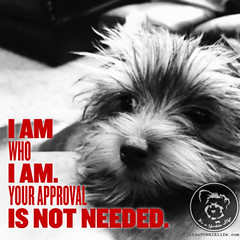 An important lesson for all of us (itsayorkielife) Tags: yorkiememe yorkie yorkshireterrier quote