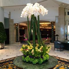 Shangri-La hotel - Hong Kong (Annabel Sheppey) Tags: china from flowers boy ballet floral night bag carpet lights hotel la neon view display room bank daily shangrila hong kong flats chanel admiralty shangri