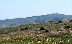 le printemps à Calern (b.four) Tags: fleurs flowers fiori calern caussols alpesmaritimes ruby3