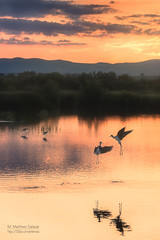 SUNSET IN PARADISE (pekenaza) Tags: sunset naturaleza lake nature beautiful beauty birds sunrise canon reflections landscape lights luces spain colours shadows paisaje lagoon colores andalucia amanecer ave puestadesol malaga atmosfera sombras reflejos fuentedepiedra atmophere warter