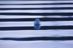Light as feather (v923z) Tags: lake abstract reflection nature water lines feather wave minimalist seefeld wildsee