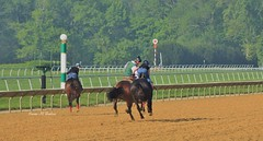 ...and the catch! (susanmbarlow) Tags: horse racetrack frosty delaware racehorse thoroughbred equus delawarepark equidae outrider equusferuscaballus delparkracing
