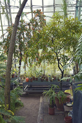 Silence (mariiasparkles17) Tags: flowers orange plants white tree green nature glass leaves st fruit garden botanical bush petersburg structure pots greenhouse shady exotica misted