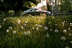 Green (Andrew Mishenko) Tags: sunset 35mm vintage ishootfilm analogue filmcamera agfa filmphotography filmisnotdead japancamera