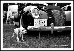 The Loyal Guard Dog - Steveston Car Show XT3442e (Harris Hui (in search of light)) Tags: bw dog canada monochrome vancouver vintage skeleton death mono blackwhite vintagecar fuji bc funky richmond fujifilm digitalbw carshow steveston loyal loyalty guarddog 23mm xt1 fujix mirrorless workuntilyoudie harrishui vancouverdslrshooter fujixseries digitalmirrorlesscamera fujixcamera fujixf23mmf14r fujixt1 fujixambassador fujifixedlens 2016lionsclubsockeyerunclassiccarshow 2016stevestoncarshow loyalguarddog