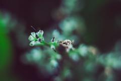 Flower (josejoseph2712) Tags: macro closeup extensiontube nikon50mm18g nikond750