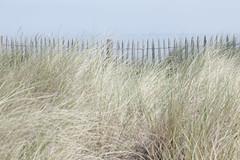 Miracoli (margot 52) Tags: erba duna spiaggia vento oceano sabbia iledolron