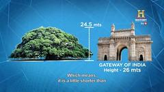 The Great Banyan Tree - OMG! Yeh Mera India (neharani47) Tags: thegreatbanyantree botanicalgarden omgyehmeraindia yehmeraindia floraandfauna