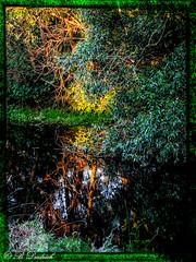 Letzter Sonnenstrahl (Fotoamsel) Tags: deutschland natur teich landschaft spiegelbild sonnenstrahl goslar niedersachsen