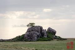 Lone tree on a kopje (DragonSpeed) Tags: africa landscape tanzania safari tz kopje serengetinationalpark shinyanga seroneraregion tzday03 africanwildcatsexpeditions