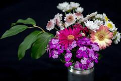 graduation flowers (Erbin D'kay) Tags: colorsinourworld
