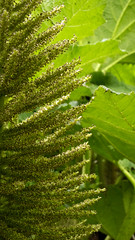Day 6 20 Logan Botanic Garden little green shoots (bob watt) Tags: uk plants flower june canon scotland 7d 2016 18135mm loganbotanicgarden canoneos7d kirkcudbrightholidayjune2016