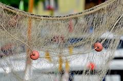 Camogli (15) (Pier Romano) Tags: italy net fishing nikon riviera italia liguria camogli pesca rete ligure levante galleggianti pescatori d5100