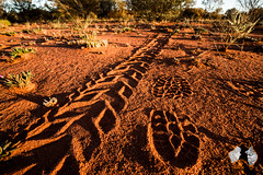 20160403-2ADU-061 Footprint - Kata Tjuta