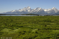 The Teton Range across Willow Flats (V. C. Wald) Tags: snakeriver mountmoran grandtetonnationalpark jacksonlake mtmoran willowflats