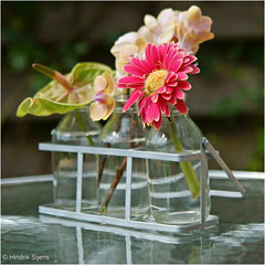 Trio (Hindrik S) Tags: trio flower blommen gerbera orchid orchidee glass gls plant bokeh sonyphotographing sony sonyalpha a57 57 slta57 tamronspaf1750mmf28xrdiiildasphericalif tamrom 1750 30mm 2016