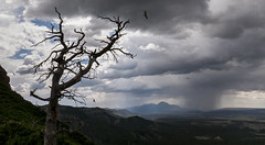 stormy day at Mesa Verde (marianna_a.) Tags: usa storm tree rain turkey dark landscape colorado vulture p2430875