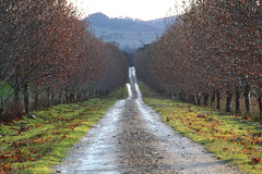 IMG_9891a (ManFromOz) Tags: vineyards mudgee gemaxphotographics geoffsmith