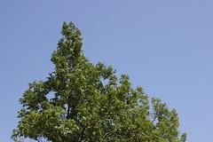 IMG_1842 (GabrielBlaisD) Tags: new summer ontario canada liskeard