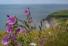 Encombe, Dorset, England (a.pierre4840) Tags: flowers england seascape landscape coast dof olympus depthoffield dorset paysage omd 1250mm em5 f3563 mzuiko