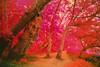 North Trail, Potomac River, IR (_Camrocker_) Tags: virginia maryland nikonf100 potomacriver kodakeir