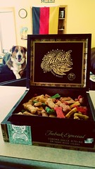 Max's Special Stash (kingkuehn92) Tags: food dog max smile puppy happy stash funny treats maximus woodenbox aussieshepherd