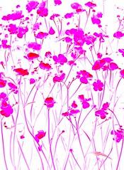 57395.22 Ranunculus acris (horticultural art) Tags: flowers ranunculus psychedelic wildflower ranunculusacris horticulturalart