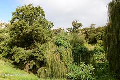 Gardens at Groot Constantia