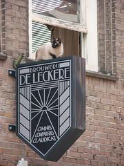 De Leckere Kat (indigo_jones) Tags: holland netherlands beer sign cat restaurant kat utrecht nederland siamese oddities bier daredevil brouwerij horeca pretaporter catsinstrangeplaces deleckere