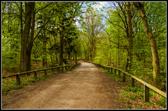 Between the Trees (mikesteph0) Tags: tree nature woodland scenery natural outdoor foliage leafs