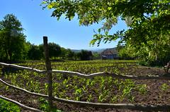 New Plantation (Alexandru Budeanu) Tags: rural corner leaving freedom countryside spring hill memories may windy romania bloom vaslui