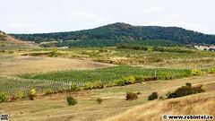 61-vita-de-vie-cluj-brands-tour-2012-crama-liliac-batos-judetul-mures-22-09-2012