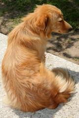 IMG_2932 (VIPevent) Tags: bitzi serbien kettenhund