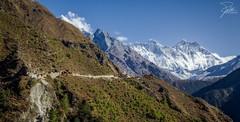 Trekking to Mount Everest (Frank Kehren) Tags: nepal yak trekking canon hiking stupa himalaya f11 lhotse nuptse mounteverest 24105 namchebazaar canonef24105mmf4lis ef24105mmf4lisusm canoneos5dmarkii mountkhumbila sagarmathazone everestbasecamptrekkingroute tengbochemonestary