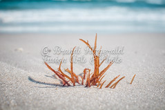 BrandiFitzgerald.LidoBeach040 (brandifitzarts) Tags: newyork beach waves scene longbeach shore eastcoast beachscene sandwriting lidobeach newyorkbeach brandifitzgerald sayingsinsand