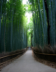 Sagano Bamboo Forest (sleepyhead's) Tags: japan kyoto bamboo arashiyama 日本 nippon 嵐山 nihon sagano bambooforest 京都市 日本国 kyōtoshi bamboogroves saganobambooforest